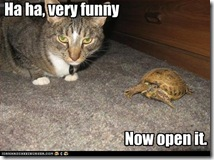 cat-asks-for-turtle-to-be-opened